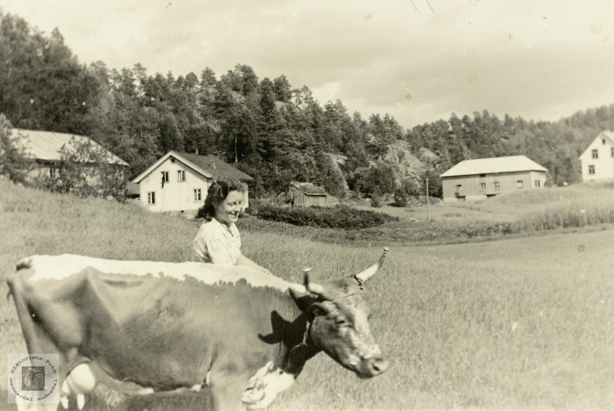 Maria Haaland og kyra trivest i lag. Grindheim Audnedal.