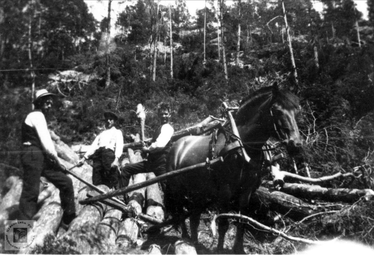 Tømmerhogst i Hasseldal med hest. Høye skog Øyslebø.