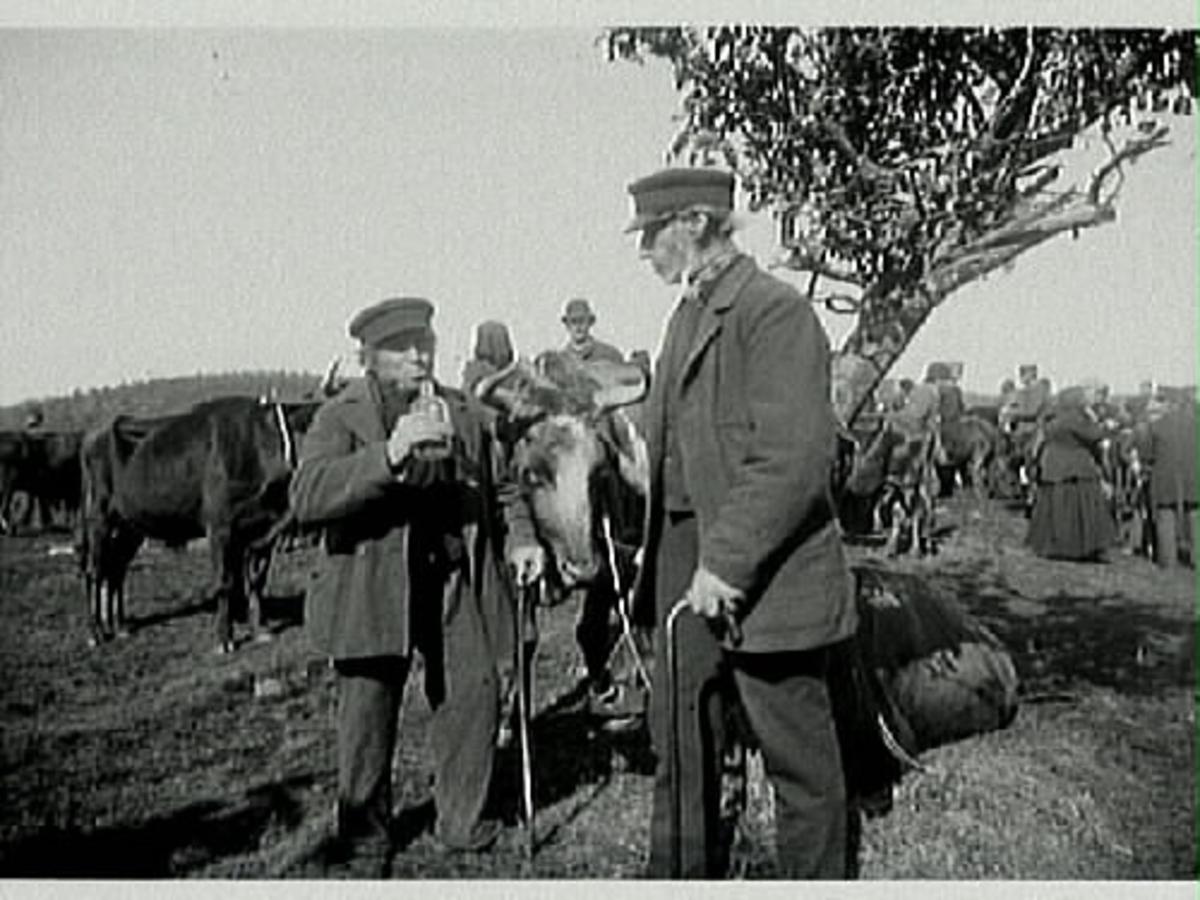 """Kreatursmarknad, Sjönevads marknad vid sekelskiftet 1900. Bilden föreställer en """"köpsup"""". Supen bekräftar att köpet är avslutat. Mannen till vänster är troligen korgmakare Bengt Aron Andreasson från Källarebolet i Asige och mannen till höger är Bengt-Johan Svensson från Vrå i Asige (född 1841)."""