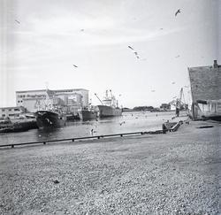 Haugesund - Gadus losser ved Iglo.