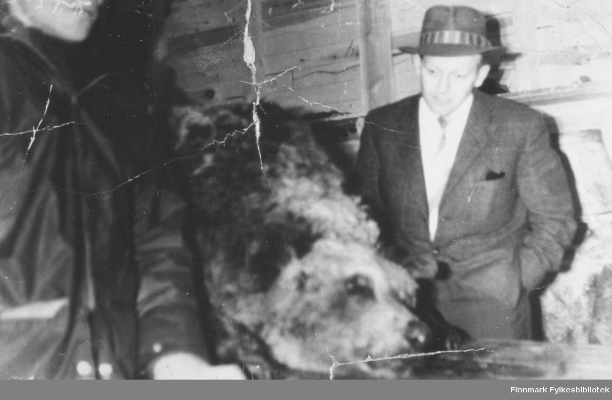 Bjørn skutt i Karasjok mens Fritz Ebeltoft var på møte i fylkestinget