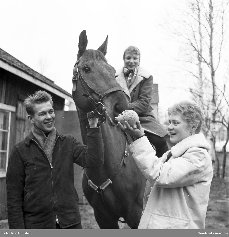 Sundsvalls Ridklubb bildades 1945 och ridhuset låg då där Sporthallsbadet nu är medan stallarna låg där Västermalms skola finns i dag. 1953 startades ridklubben Sporren som en junioravdelning till SRK. Ungdomarna hade ridundervisning för medlemmarna som rekryterades från läroverket, flickskolan och folkskolorna. 1957 flyttades hästarna till Kubikenborg och reds varje dag ner till ridhuset. 1966 revs det gamla ridhuset och hela verksamheten flyttade till Kuben och ridlektionerna hölls då utomhus. 1970 flyttade ridklubben till Kungsnäs i Selånger där det först 1977 stod ett nytt ridhus klart att invigas.