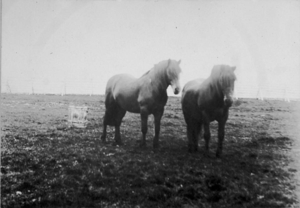 To hester på et jorde