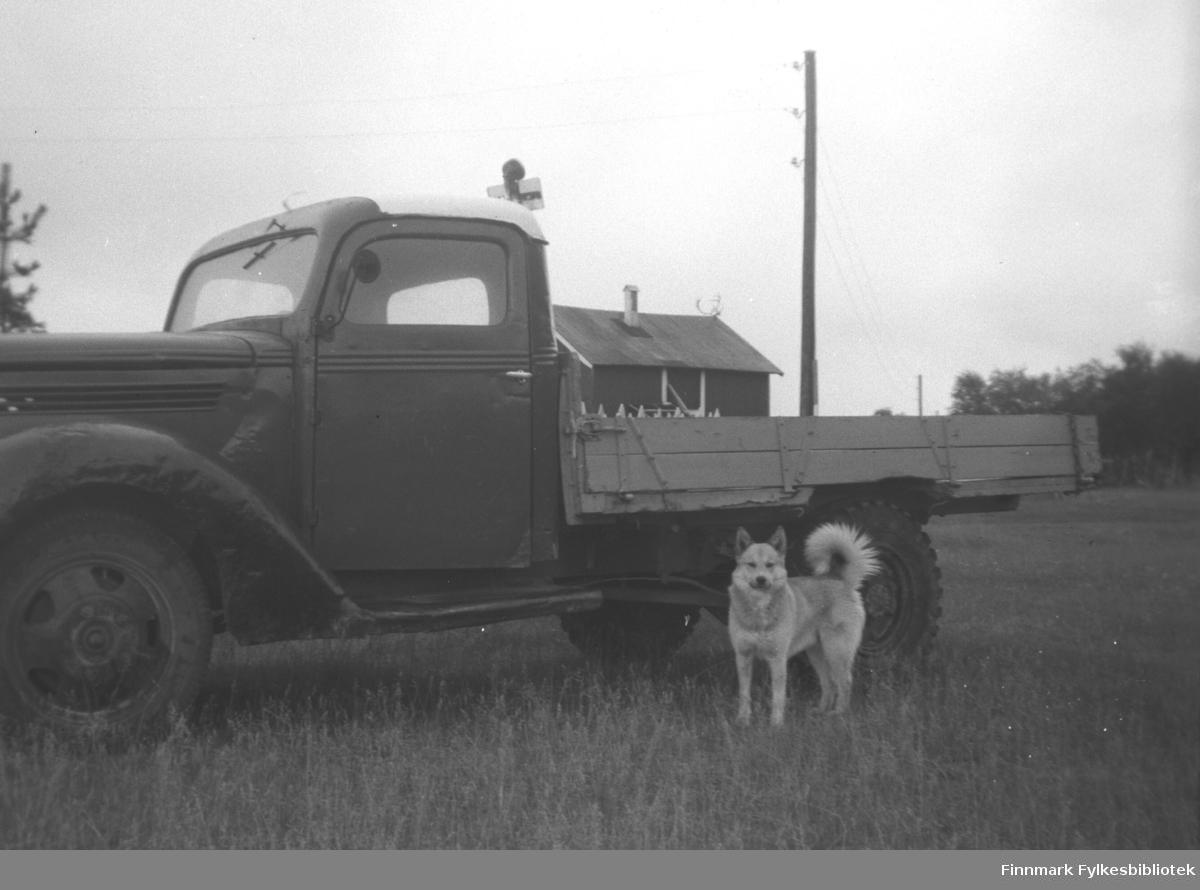 Storm Mikkolas Ford lastebil (Ford V8 årsmodell 1938-39) parkert i ei eng på gården Mikkelsnes i Neiden. En hund står ved bakhjulet.