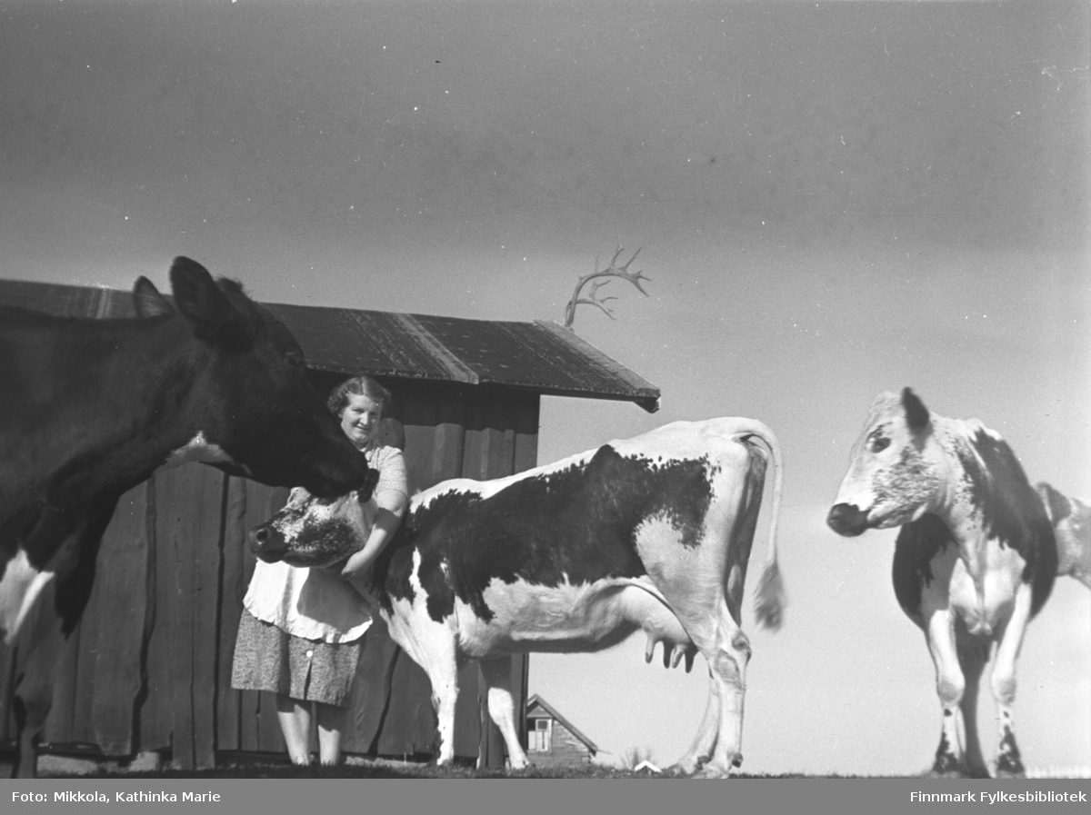 Astrid Mikkola med kyrne på gården Mikkelsnes. Bak henne et uthus, pyntet med reinhorn