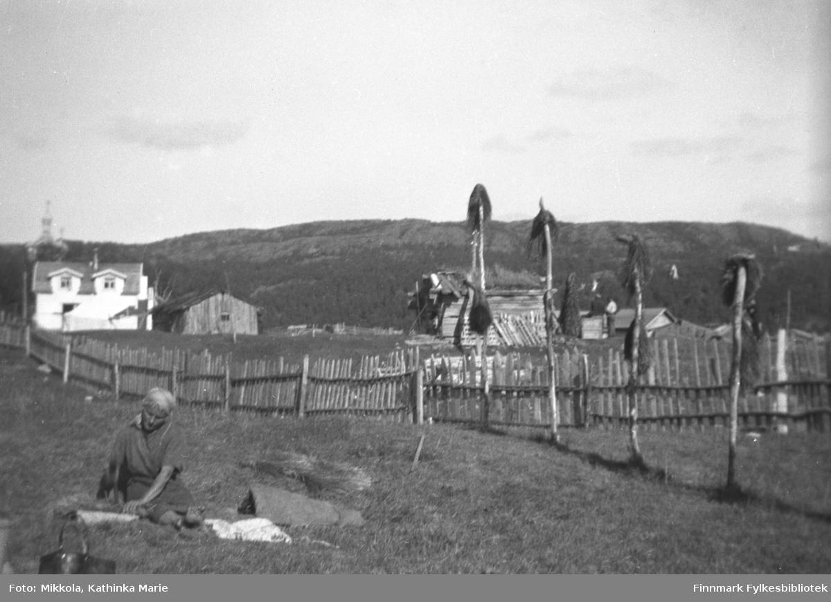 Ukjent kvinne banker sennagress i Neiden. Gresset henger til tørk på de lange stokkene til høyre i bildet. I bakgrunnen ser vi Haaheims hus og kirka