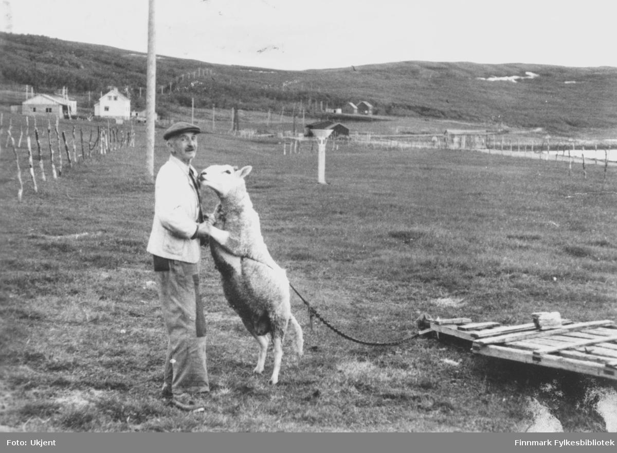 Et fotografi sendt som et postkort. På bildet danser Emil Johansen med sin sau Mathis. Han er kledd i lue, jakke, bukse og sko. Mathis er festet med kjetting til et par planker i nærheten. I bakgrunnen kan man se gjerder og stolper. Flere hus kan man også se, og fjell. Postkortet sendt i 1959, men bilde ble tatt 1958.