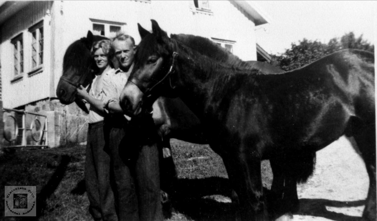 Hestene til Reidar og Sigmund Tjomsland.