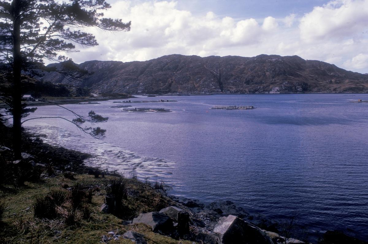 Skotsk fjord med merder.