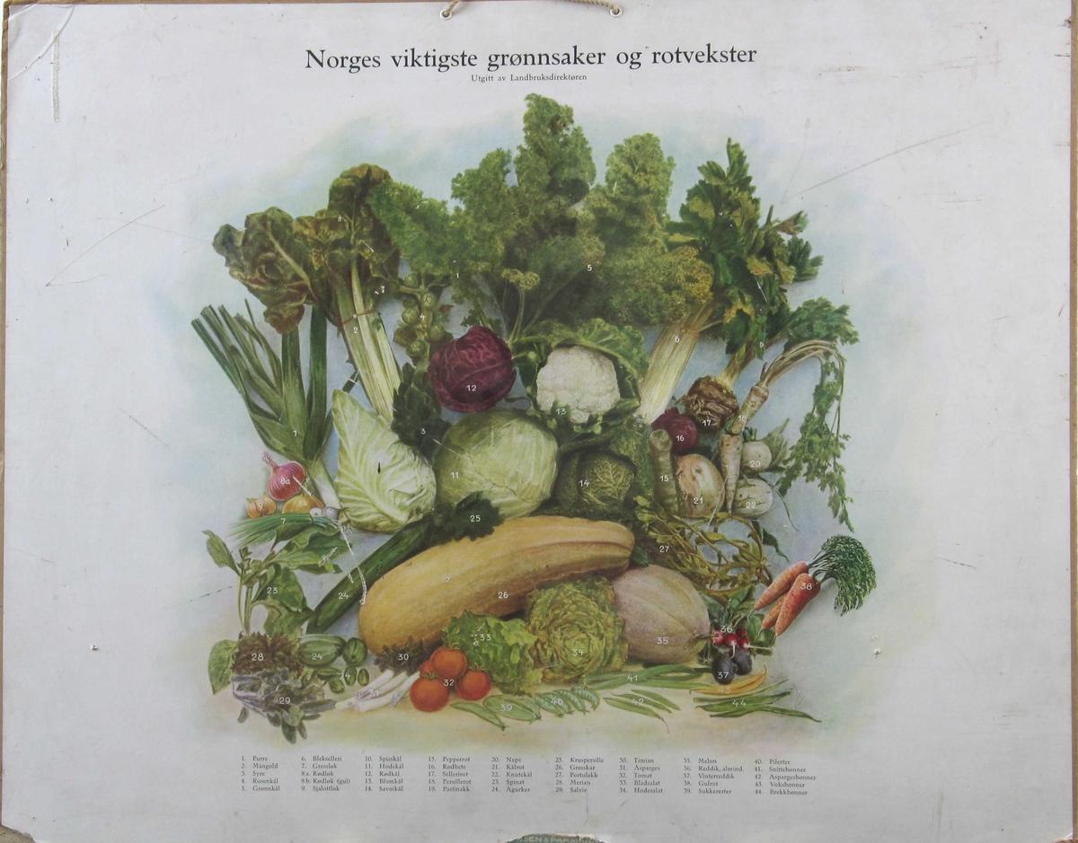 Tegning av ulike grønnsaker, navn på hver av disse.