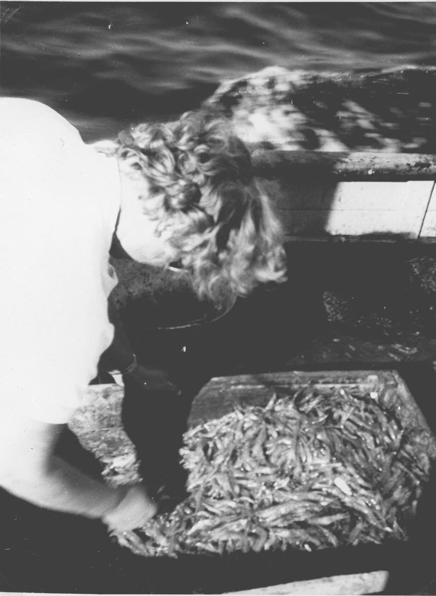 Dame som renser fiskeefangsten