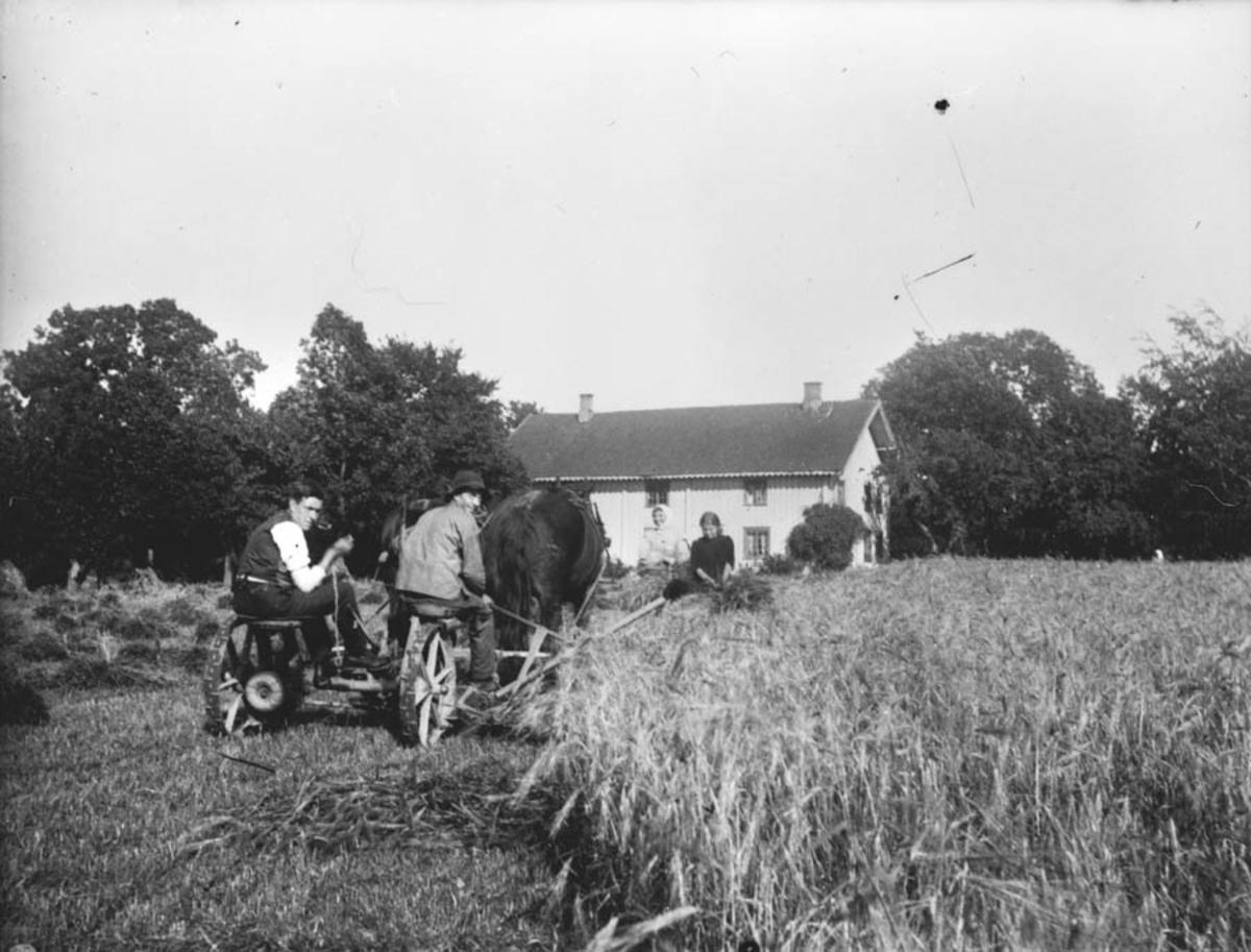 Skuronn. Slåmaskin, gårdsgutt Andres Østby.