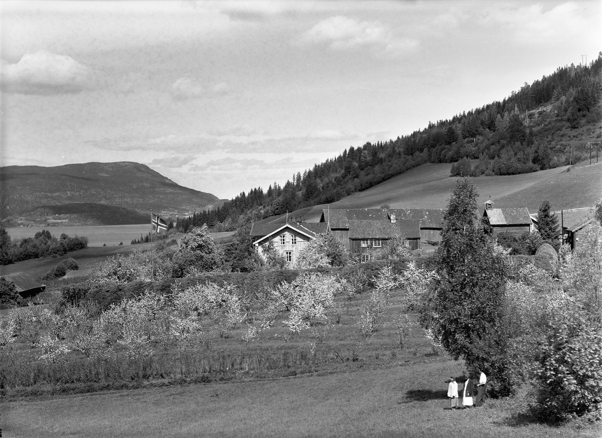 Kulturlandskap ved Mjøsa. Øvre Ulvin gård på Morskogen.