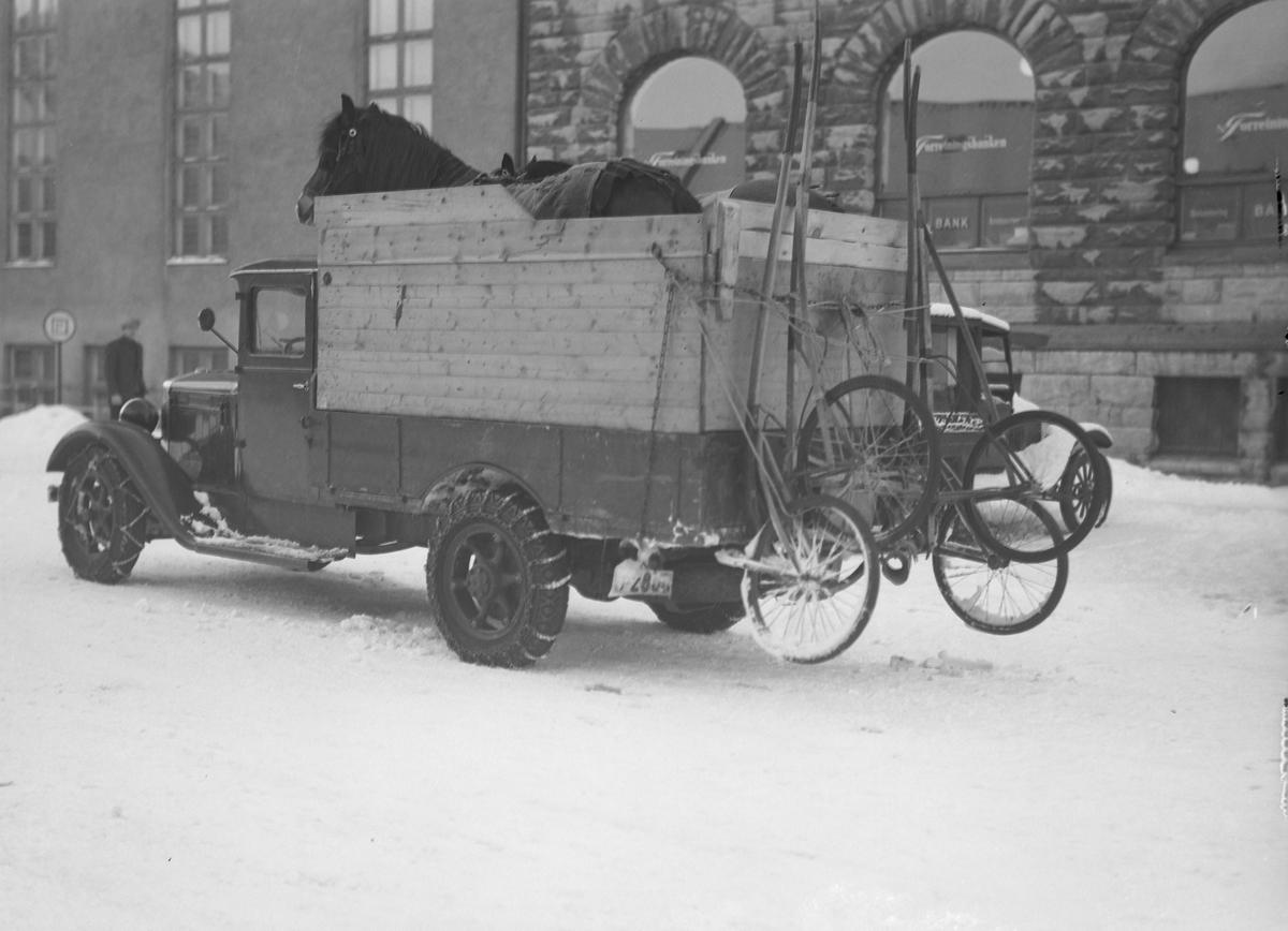 Hestetransport med åpen lastebil