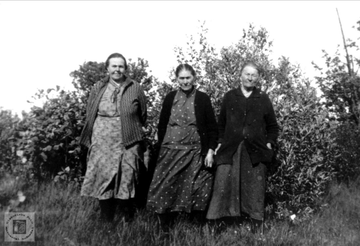 3 kvinner Falk, Vestfossen, Øyslebø.