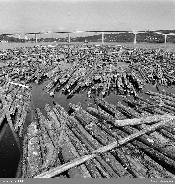 Bogsering av timmer vid Alnöbron.