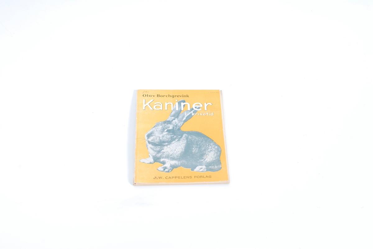 Kanin på forsida