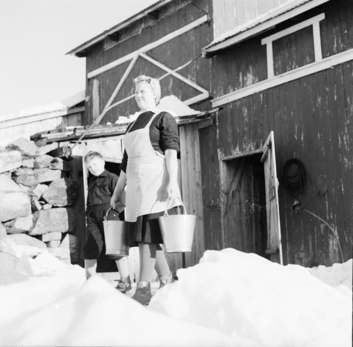 """Vardens arkiv. """"Besøk på fjellgård mellom Rauland og Rjukan"""" 07.01.1954"""