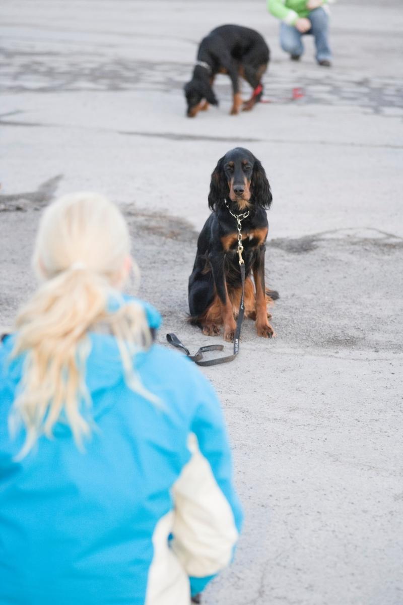 Dressurkurs for hund. Hund venter på kommando fra hundeeier.