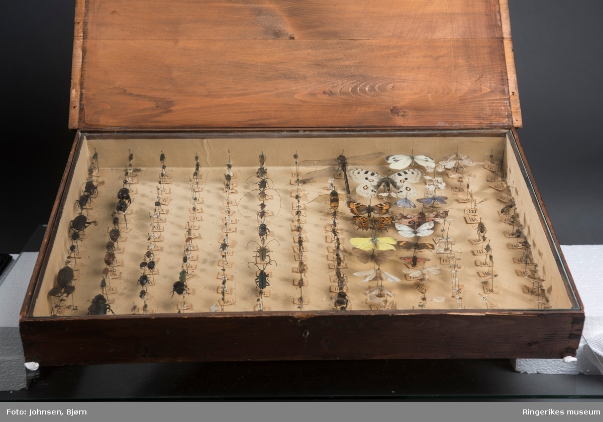 Stor insektsamling montert i et trekasse med glasslokk. 150 forskjellige norske insekter. Samlingen er brukt  i naturfagundervisningen ved Hønefoss skole
