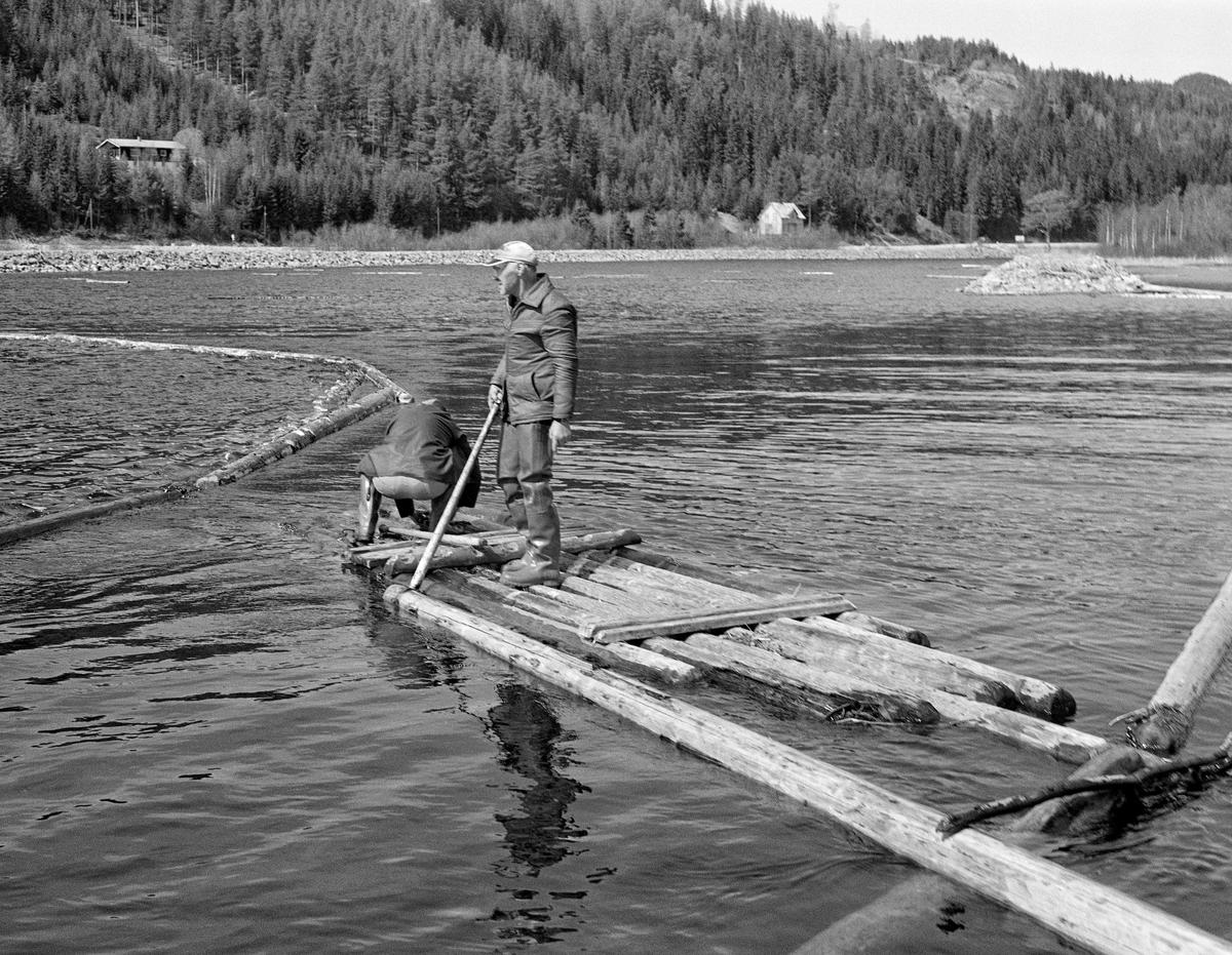 Lenselegging ved Åsheim i nordenden av Storsjøen i Ytre Rendalen våren 1984.  I forgrunnen ser vi en tømmerflåte der Borgar Nyberget og Hans Andrå tredde kjetting gjennom «øyet» på en lensestokk som lå ved enden av flåten.  Kjettingen skulle deretter trekkes gjennom «øyet» i enden på en annen lensestokk, og slik fortsatte karene inntil de hadde en lang kjede av stokker som kunne fungere som flytende stengsel for løstømmer, enten i ei oppsamlingslense eller i en slepbar ringbom.  Til høyre i bakgrunnen ser vi en varpebåt, et åpent stålfartøy med innvendig dieselmotor og vinsj.  Her i nordenden av Storsjøen ble varpebåtene brukt under arbeidet med lenser og ringbommer.  Mot slutten av sesongen gikk de også langs strendene sørover sjøen for å samle løstømmer som skulle slepes sørover mot utløpet i elva Søndre Rena.