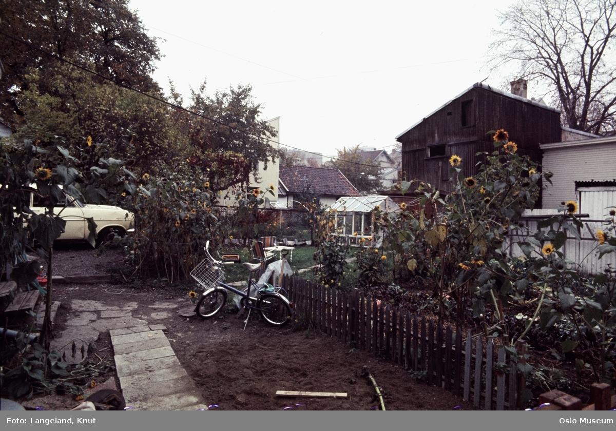 trehusbebyggelse, hage, gjerde, solsikker, sykkel, hagemøbler, drivhus, bil