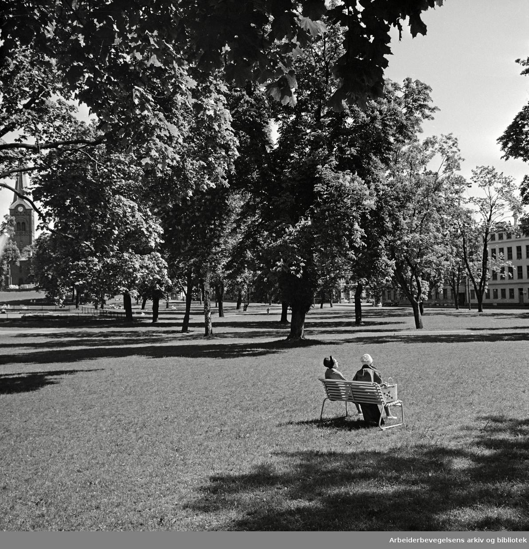 Sofienberg-parken. Juni 1967.