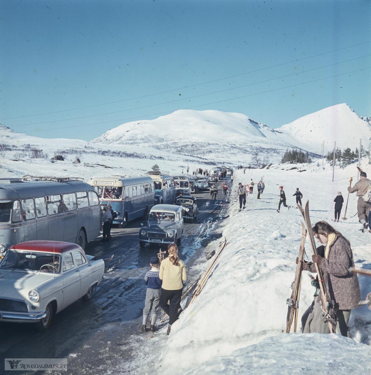 Ørskogfjellet..Mange fra Ålesundområdet reiste dit når det var gode forhold for skitur. Bussene er sannsynligvis fra 1950-tallet og det er få personbiler å se. Folk var mer avhengig av buss den gangen. Den fremste bussen, grålakkert, tilhørte Vestnesruten, som hadde ruter Ålesund-Vestnes i korrespondanse med fergene til og fra Molde. De neste to bussene tilhørte Skodjeruta som hadde busser lakkert i blått og gult. Den første av disse to minner om T-1042, 1955-modell, som er bevart og eksisterer som veteranbuss..Nærmeste bil: Ford Consul 1956-ca. 61, fulgt av Volvo Duett.