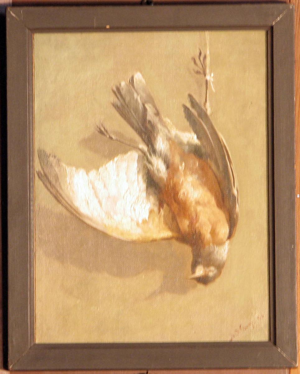 Rektangulært. Stilleben; fugl henger e. benet; rødbrunt bryst, hvite og grå vinger, gråbrun bakgr.