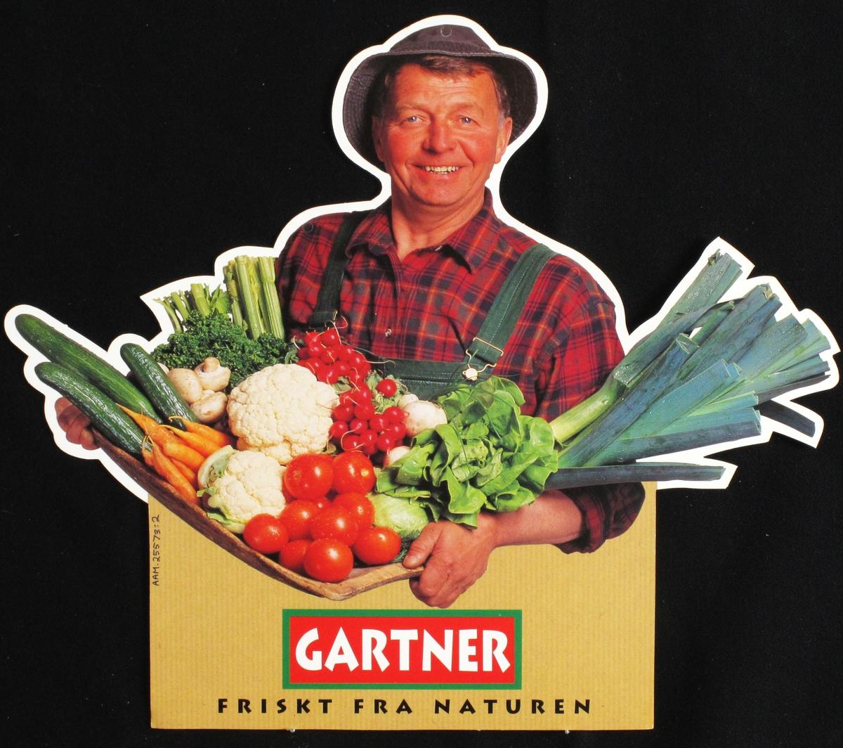 Gartneren med favnen full av grønnsaker: Tomater, blomkål,purre m