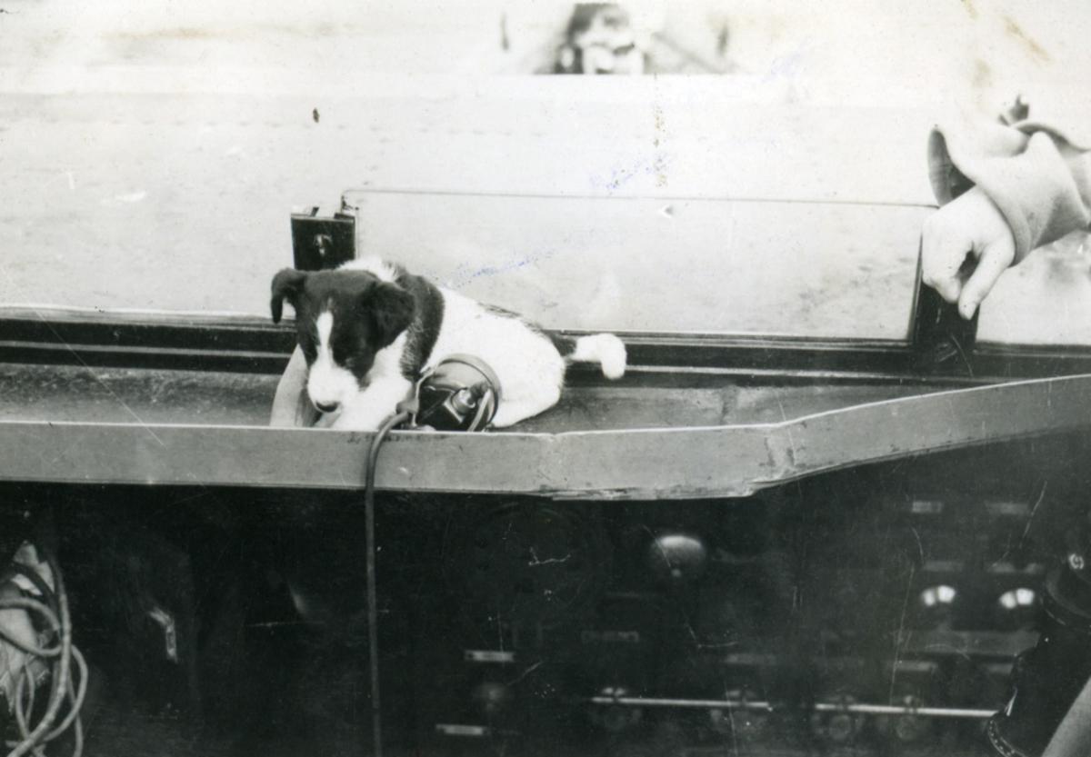 """Album Glaisdale H.Nor.M.S. """"Glaisdale"""". Fotograf: Ltn.Knudtzon. Skipets hund."""