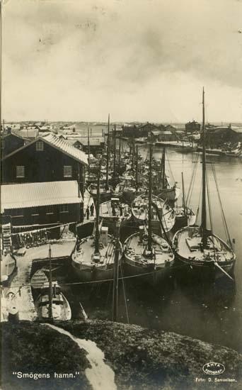 Fiskeflottan i Smögens hamn 1924.