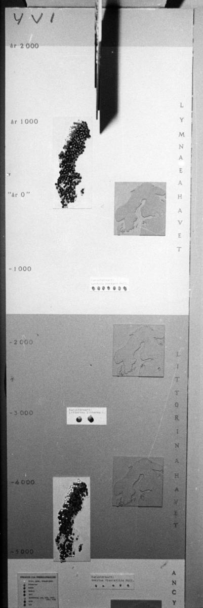 'Foton av pelarna med kronologier i Göteborgs Naturhistoriska museums basutställning ''Vår jord''. :: Pelare nr. 1, 2, 3, 4. ::  :: Pelare 4V1.'