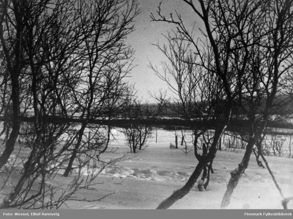 Et vinterbilde fra Vestre Jakobselv. På bildet er det snø noen spor på snøen og flere bjørketrær.