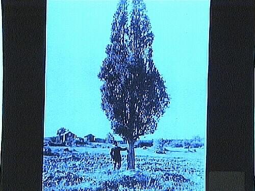 En man vid ett träd.