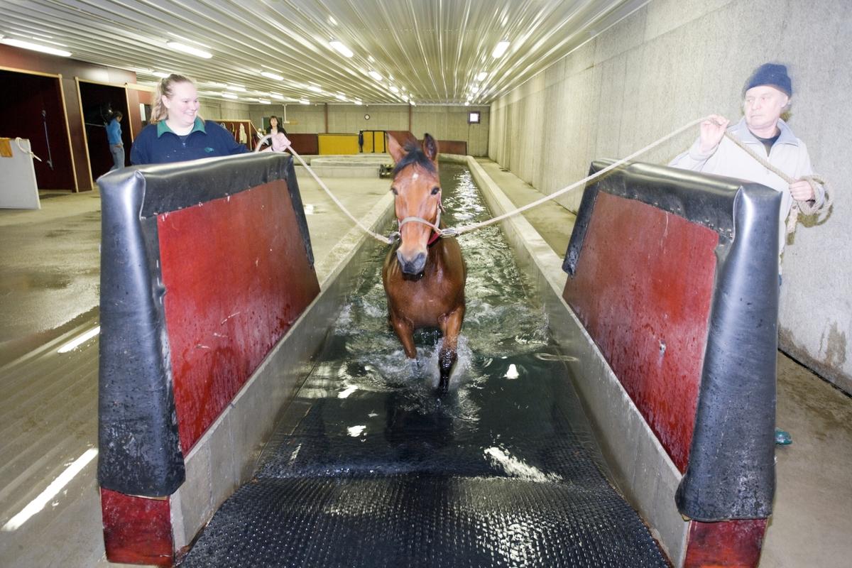 Svømme- og rehabiliteringssenter for hest. En hest er på vei opp av svømmebassenget etter svømmeturen.