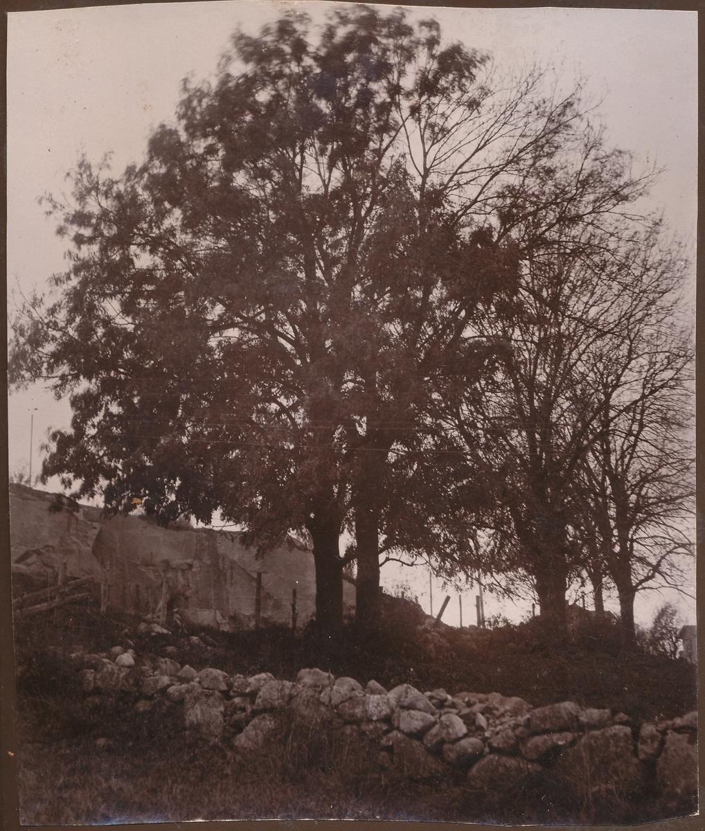 Løvtrær og stenmur
