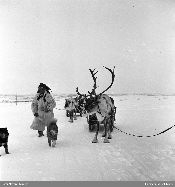 Raide med reindriftssame i hvit pesk foran raiden. Fotografert i Kautokeino i perioden 1939-40. Person ukjent.