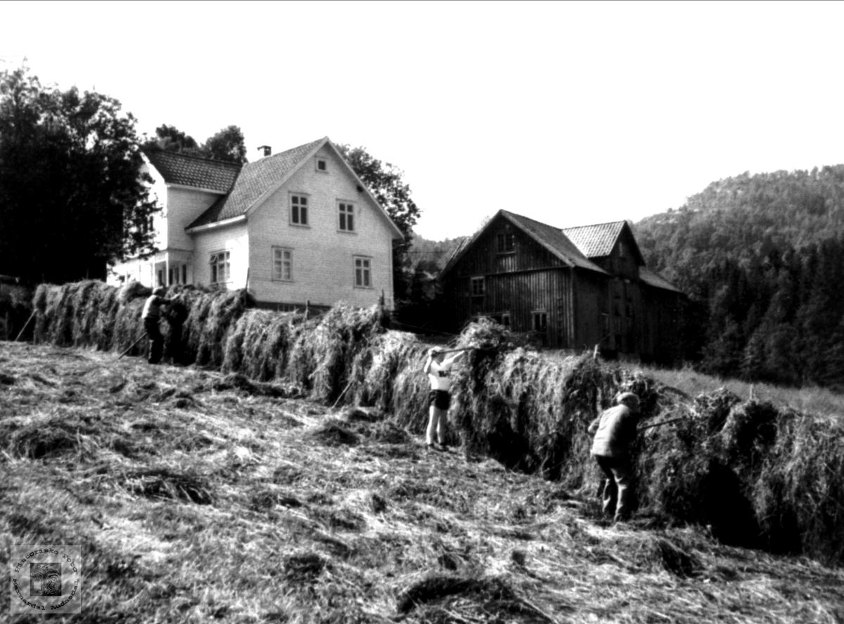 "Haustonn ""Der nede"", Mindrebø, Bjelland."