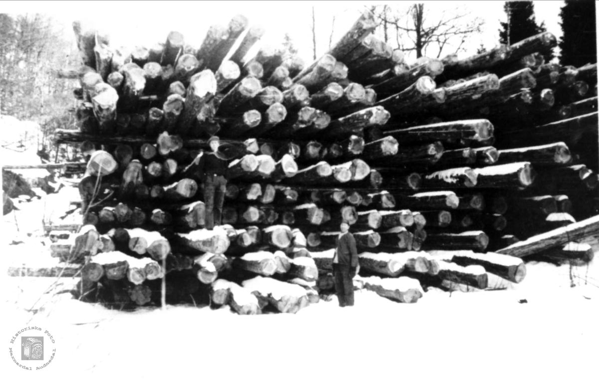 Skogsdrift i Gudny Finsdals skog