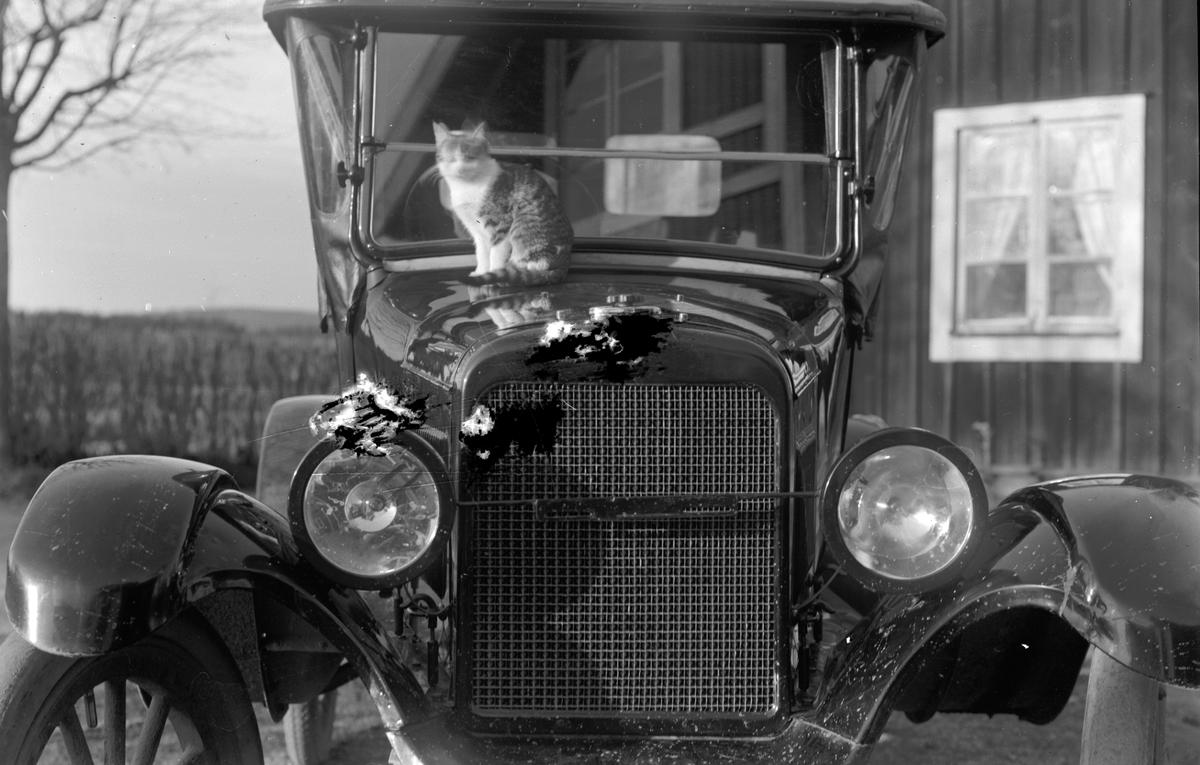 Katten solar sig på Josef Erikssons Overland bil, 1922 års modell.