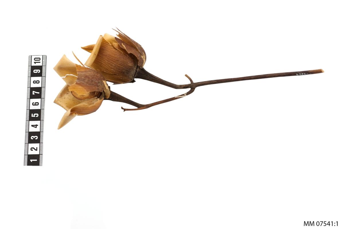 Rosor i ljusgult och brunt(wood-rose).