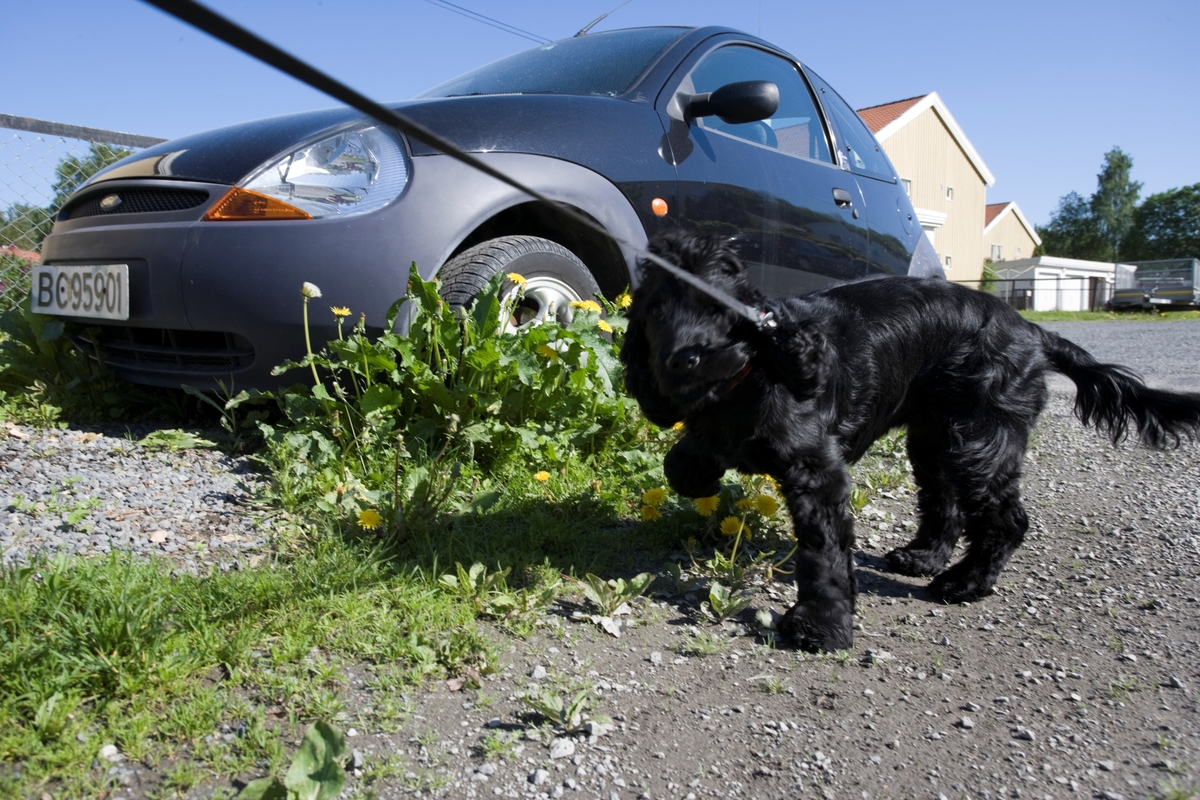 Hunden Emmy på tur.