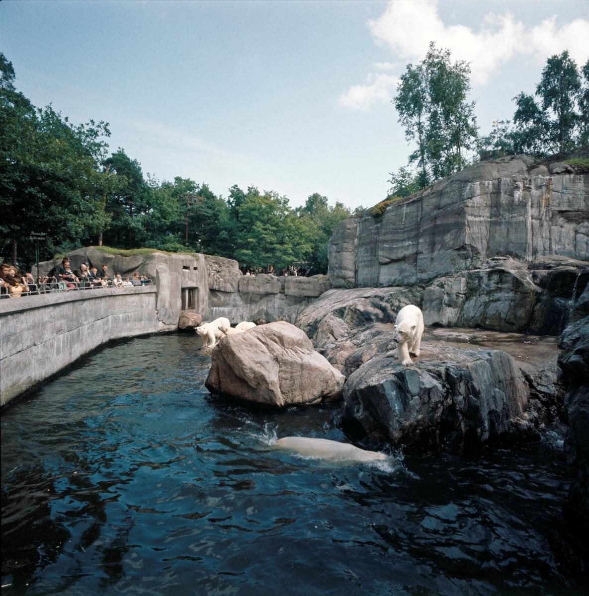 Björnbergets isbjörnar. Anläggningen byggdes 1934, och var en utvidgning av den gamla isbjörnsburen.