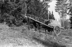 Kjøring med hest og kjerre, lastet med halmbunter, i terreng