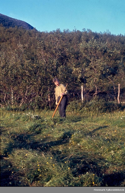 """Kunes, sommeren 1963. Johan Mikkel Tornvik (20.07.1909-26.03.1987) slår hjemme hos seg selv. Fjellet i bakgrunnen er litt av Lowdes. Kunes (samisk: Gussanjárga) er en bygd i Lebesby kommune i Finnmark. Stedet ligger innerst i Storfjorden. Fylkesvei 98 passerer igjennom Kunes. Fotografen, Richard Bergh, har også skrevet et hefte som heter: """"Når vi sitt' her og prate"""". Folk i Laksefjord forteller. Norsk Folkeminnelags skrifter nr. 122. H. Aschehoug & Co. (W. Nygaard). Oslo 1980. ISBN 82-03-10187-9"""