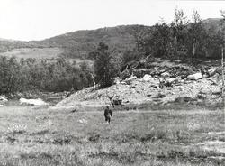 Une og bukken - sommeren 1961