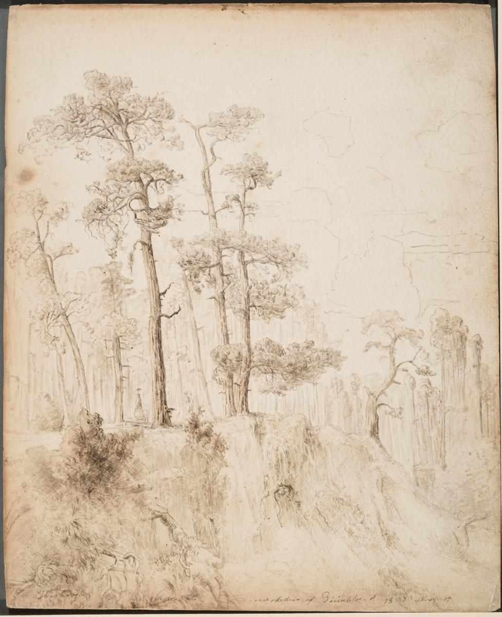 Fururabb [Tegning]