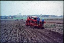 Lantbruk, potatisodling och skörd