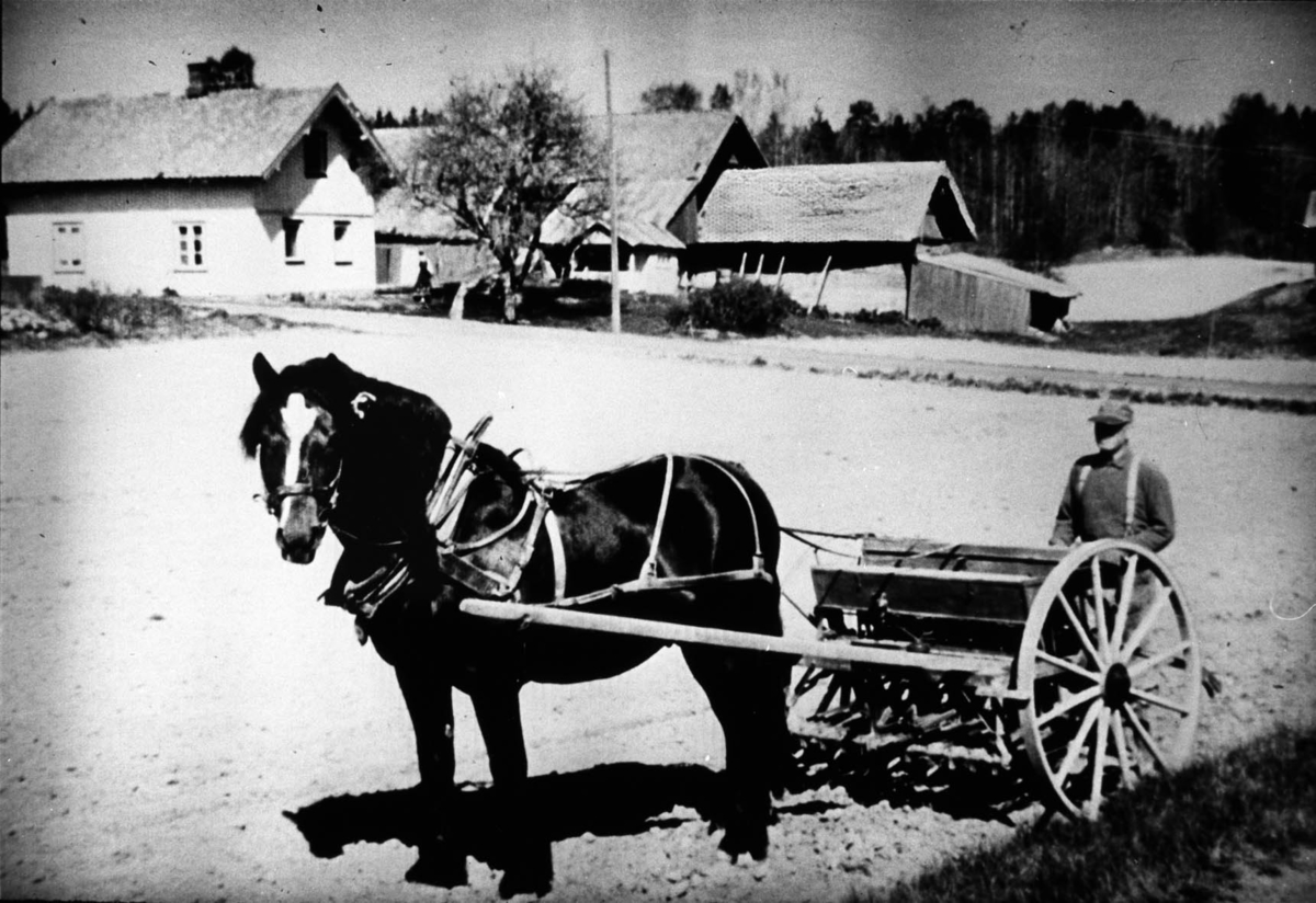 Hest, såmaskin, mann, jorde, bolighus, uthus